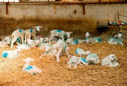 Woodlands Dairy shoot